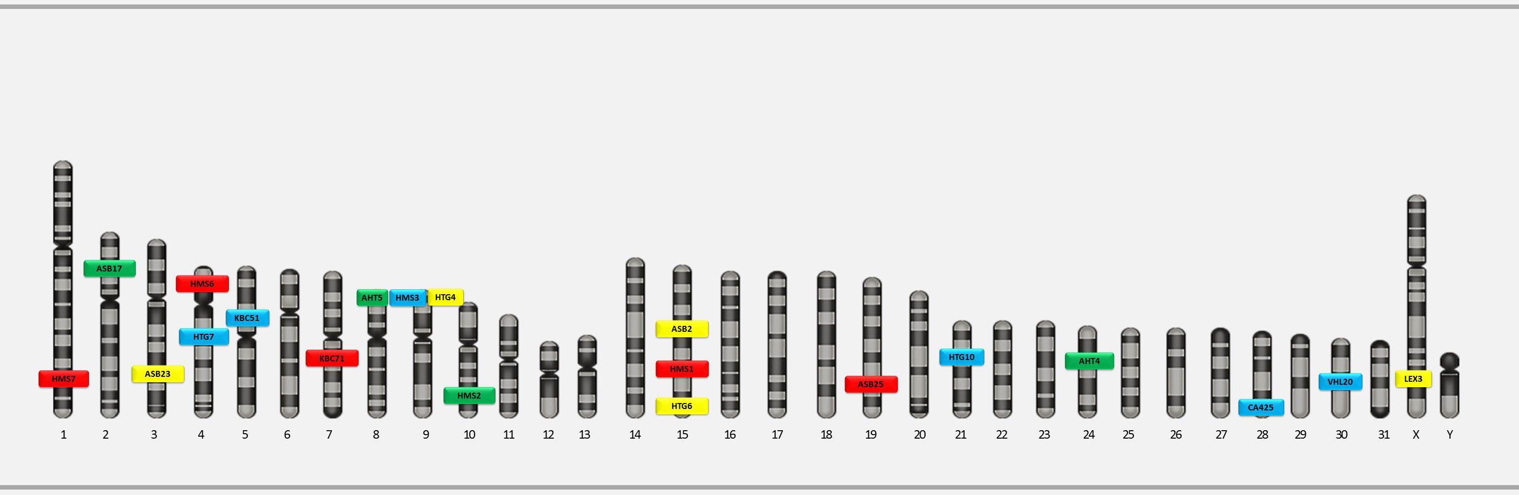 Marker arrangement in GTEquine 5-dye QF-PCR kit for equine DNA identification using QF-PCR technique