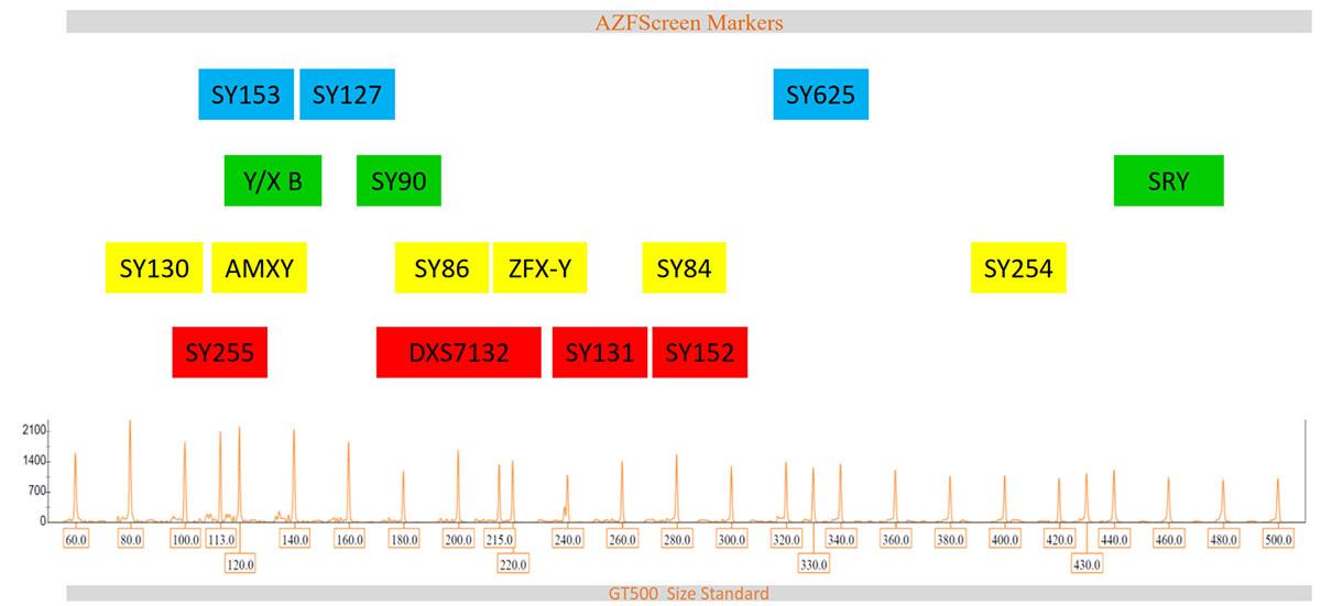 Marker arrangement in AZFScreen kit for Y chromosome in AZFScreen for Y chromosome microdeletion diagnosis
