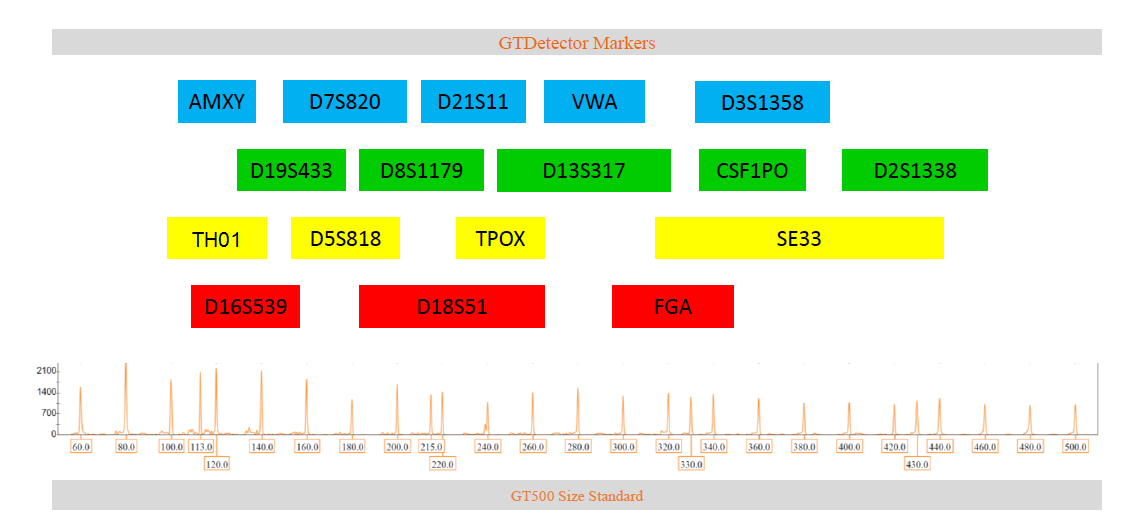 Marker arrangement in GTDetector 5-dye QF-PCR kit for human profiling in forensic cases & parentage identification