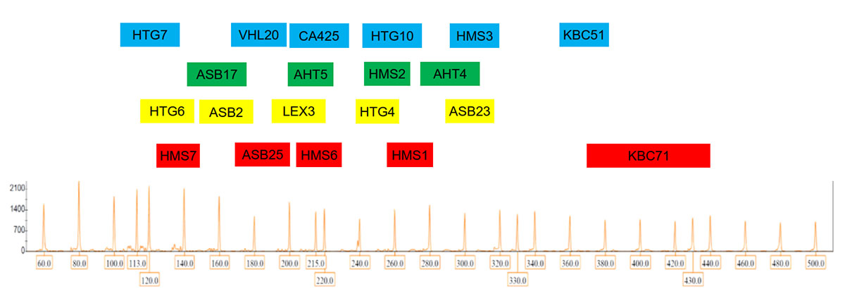 Marker arrangement in GTEquine 5-dye QF-PCR kit for equine DNA identification using QF-PCR technique