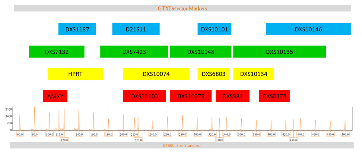 STR Marker arrangement in GTXDetector 5-dye QF-PCR kit for female DNA profiling in female sexual assault & forensic cases