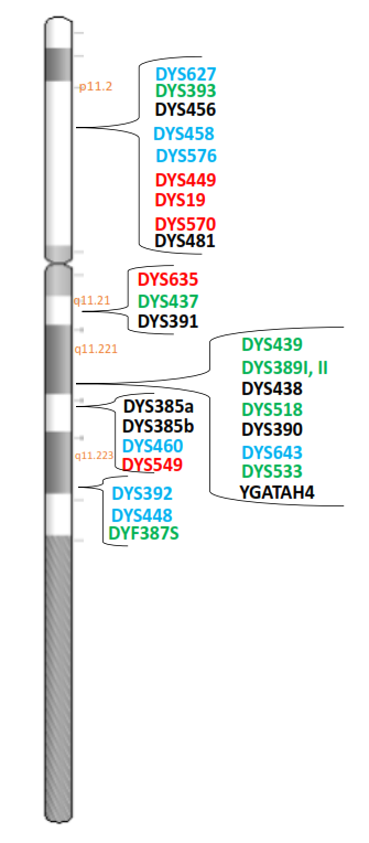 Locations of GTYDetector STR markers on the Y chromosome