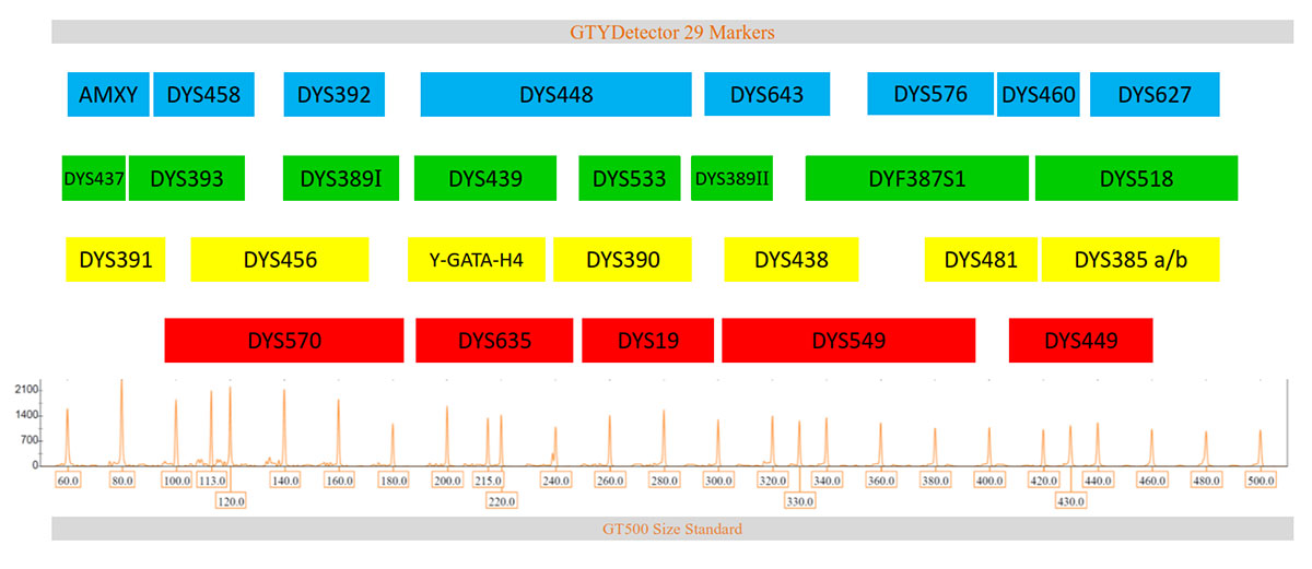 Marker arrangement in GTYDetector 5-dye QF-PCR kit for male profiling in sexual assault, forensic casework & paternity cases