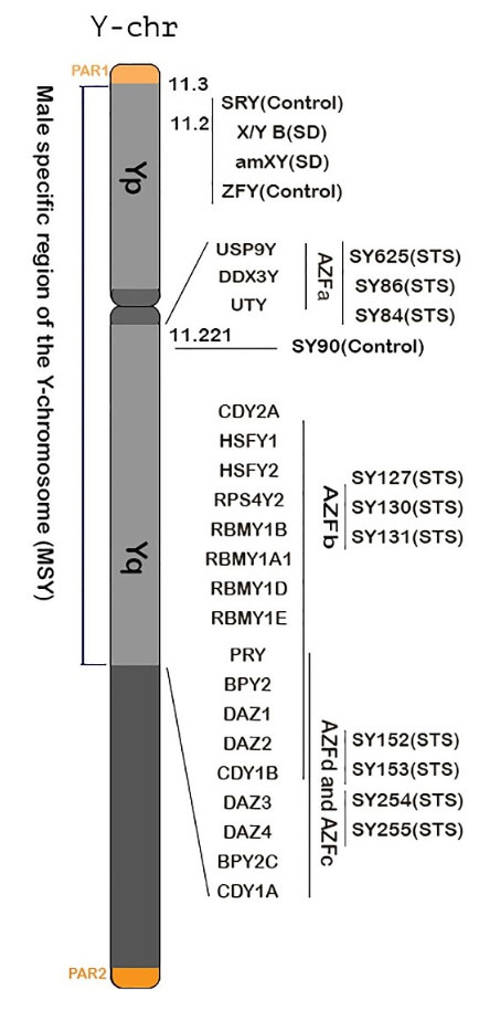 Locations of markers on Y chromosome in AZFScreen for Y chromosome microdeletion diagnosis