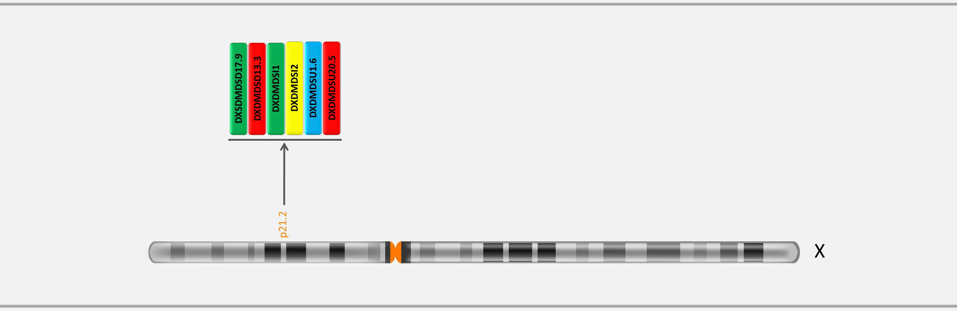 Locations of markers on X chromosome in GTHapScreen DMD 5-dye QF-PCR kit for Duchenne or Becker Muscular Dystrophy diagnosis