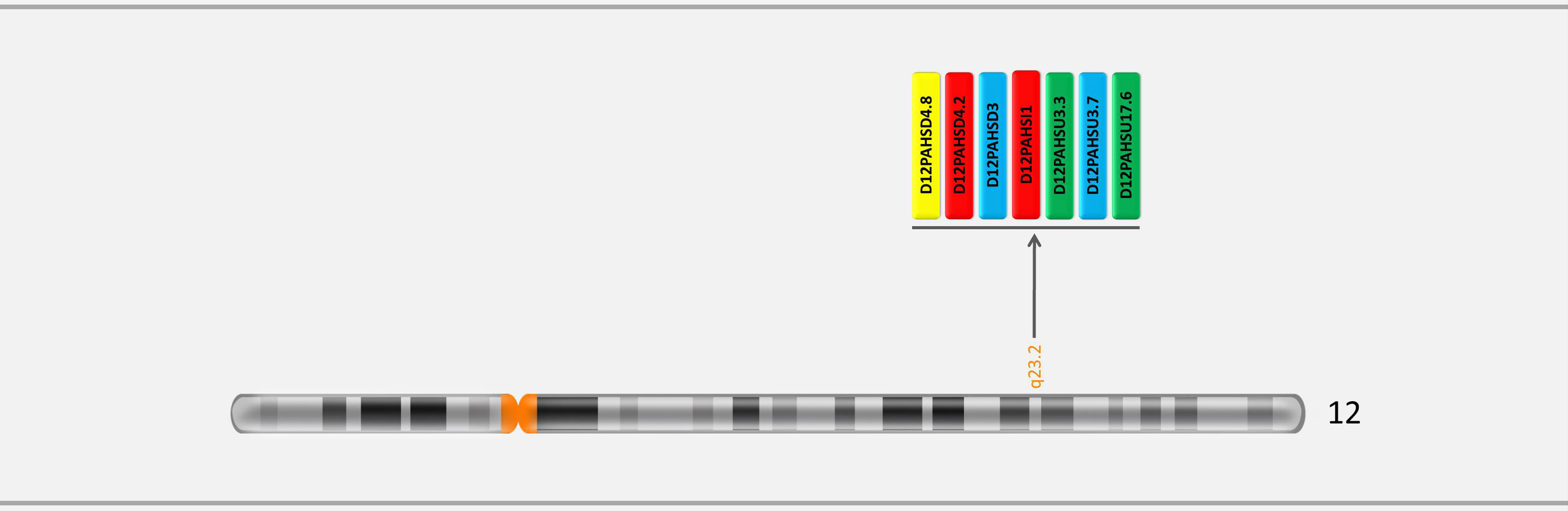 Locations of markers on chromosome 12 in GTHapScreen PAH 5-dye QF-PCR kit for Phenylketonuria or PKU diagnosis